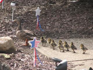 Patriotic litter. | by Cuyahoga jco