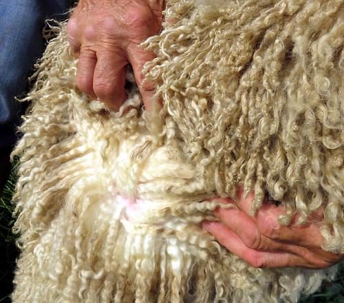 pickwick-fleece-closeup1 | by RJRS