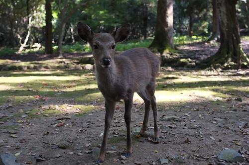 More Deer   by MatthewW