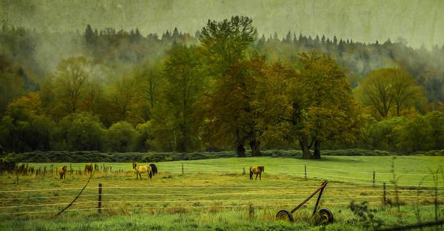 D800 Painting Horse Pasture 5290