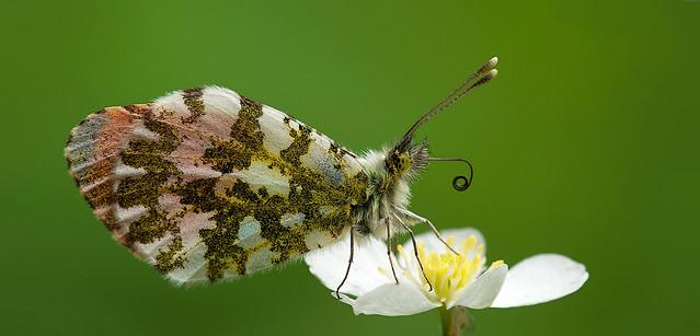Fiori e farfalle   2