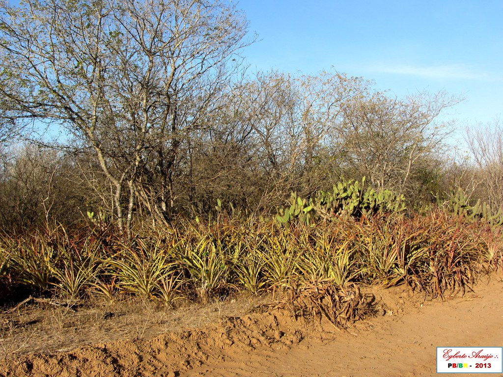 Boa Vista-PB. Zona Rural. Fazenda Rabicha (1)