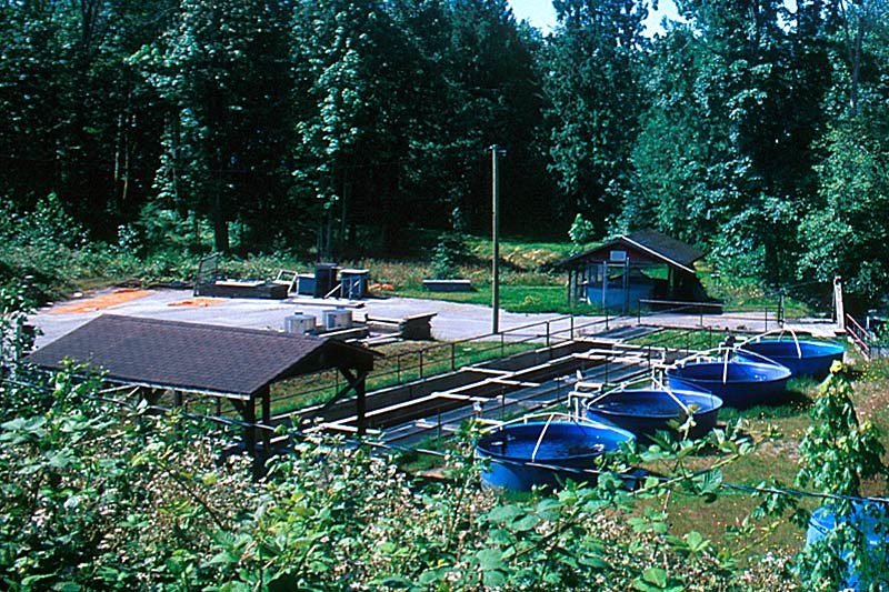 Sliammon Fish Hatchery, Sliammon, Malaspina Peninsula, Sunshine Coast, British Columbia, Canada