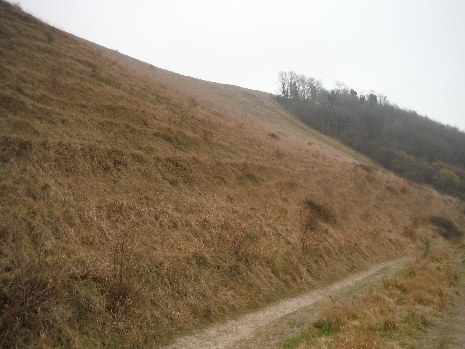 Battlesbury Hill from footpath at base SWC Walk 286 Westbury to Warminster (via Imber Range)