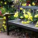 Daffodil Bench