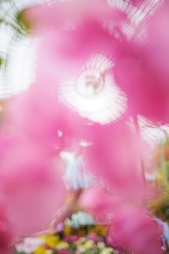 Tropical Flower | by けんたま/KENTAMA