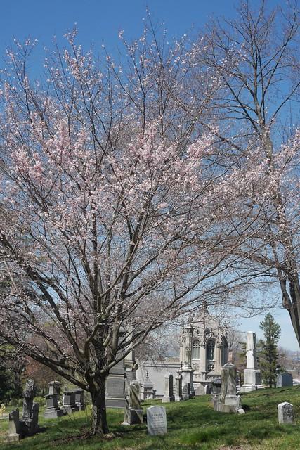 日, 2017-04-09 11:36 - Green-Wood Cemetery