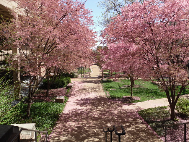 Spring in St. Louis