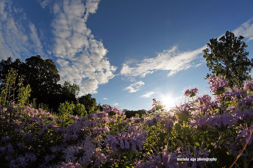 park flowers trees summer sky sun nature grass clouds landscape quote meadow fisheye thegalaxy