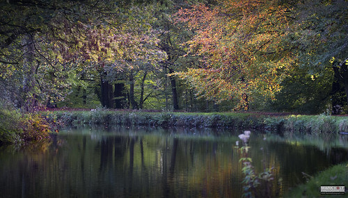 trees color colour water reflections woods peace tranquility canals lancashire chorley autumncolors theleedslivepoolcanal theleedstoliverpoolcanal