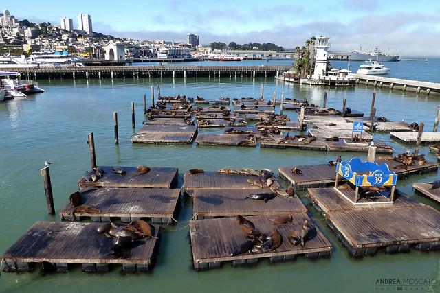 Sea Lion Colony - San Francisco, California
