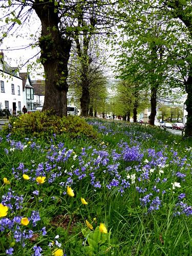 flowers bluebells bttercups grass bank trees bole houses leaves stalks green yellow blue newnhamonsevern gloucestershire street view wildflowers panasonicdmctz60