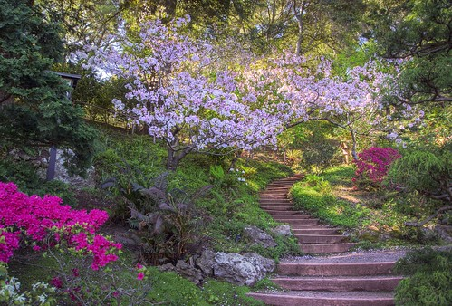 Follow the stairs into spring | by PeterThoeny