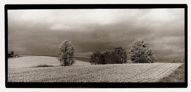 Paysage : non loin de Gingsheim -1
