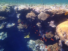 Blue Hole Dahab August 2012