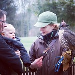 George meeting his first falcon
