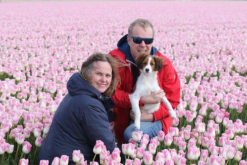 Tulpenroute met Yerke   by NLHank