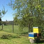 Schwärmerei - Ein Bienenvolk bricht aus