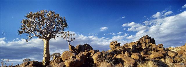 Kokerboom Woud