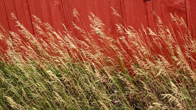 Prairie Abstract, Carsten Burfiend Farm, Port Oneida, MI, 2013