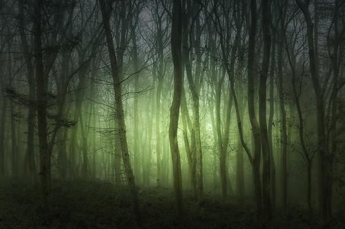 trees mist misty woodland woods nikon mood moody spooky warwickshire errie mistywoods weethley d7000 jactoll