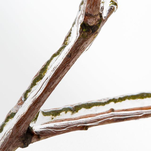 Icy twig.jpg