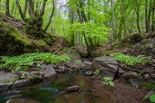 Fresh green ! | by thunderbird-72