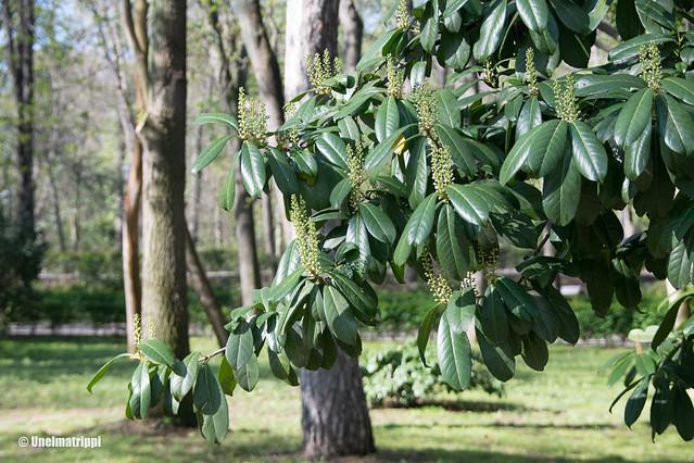 Vihreälehtinen kasvi Retiron puistossa