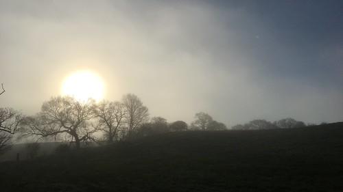 sunshine fields haighton trees tree mist sunrise iphone landscape preston