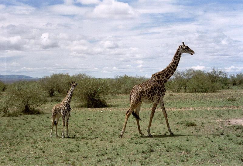 Kenia2002-11-13