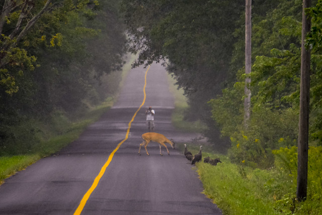 Deer Turkey Photographer-3319