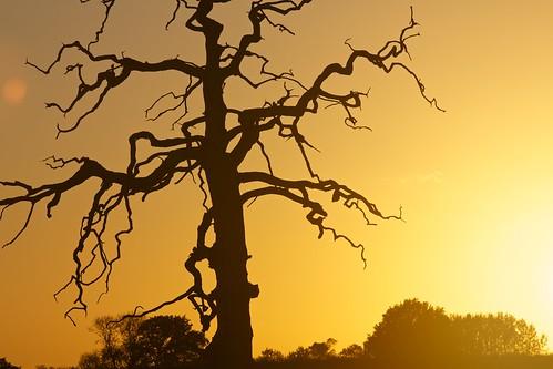autumn sunset sun tree dead tramonto sole albero