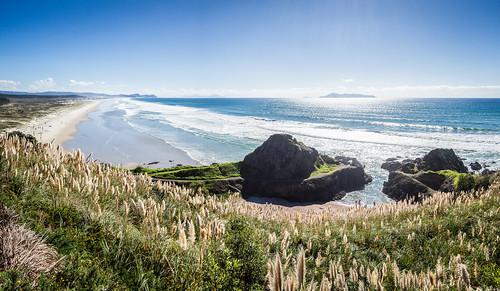breamhead breamtail henandchickenislands newzealand northland pacificocean pampasgrass tearai tearaibeach tearaipoint beach coast coastline landscape ocean panorama sea seascape sun surf surfing invasiveweed
