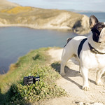 Rudi at Lulworth Cove