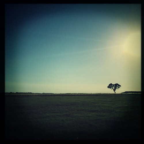 sunset tree silhouette landscape explore minimalism solotree iphoneography hipstamatic danapeakpark jollyrainbo2xflash purehipstamatic w40film hipstaconnect hipstaweekly abbielens