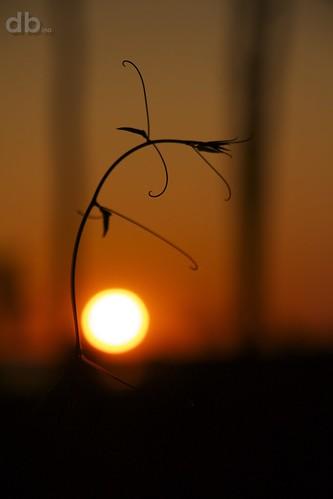 sunset ballet silhouette canon florida bokeh catbriar smilax borderfx