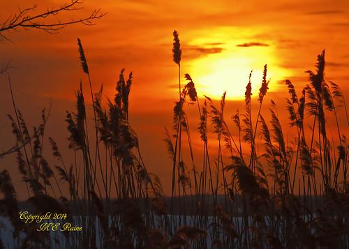 "winter sunset nature wetlands marsh silhouetted winterscape ""new jersey"" richarddekortepark ""meadowlands"" nj"" ""lyndhurst"