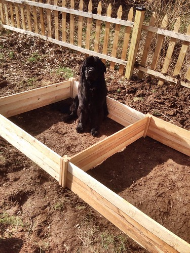 Annabel was very enthusiastic about helping us with the new garden boxes. | by willentrekin