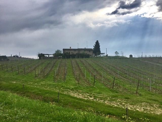 La casa nel vigneto  - The House in the vineyard
