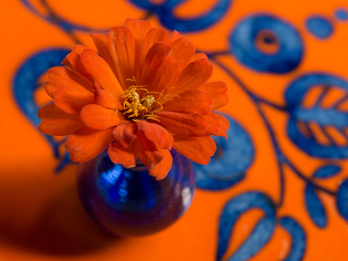 Orange and Blue Complement Each Other -Explored April 2, 2017   by Anne Worner