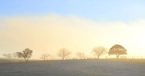morning trees winter sun weather fog rural sunrise landscape nikon frost farm foggy sunny australia frosty victoria vic gippsland warragul westgippsland d5100 nikond5100 phunnyfotos gippypics