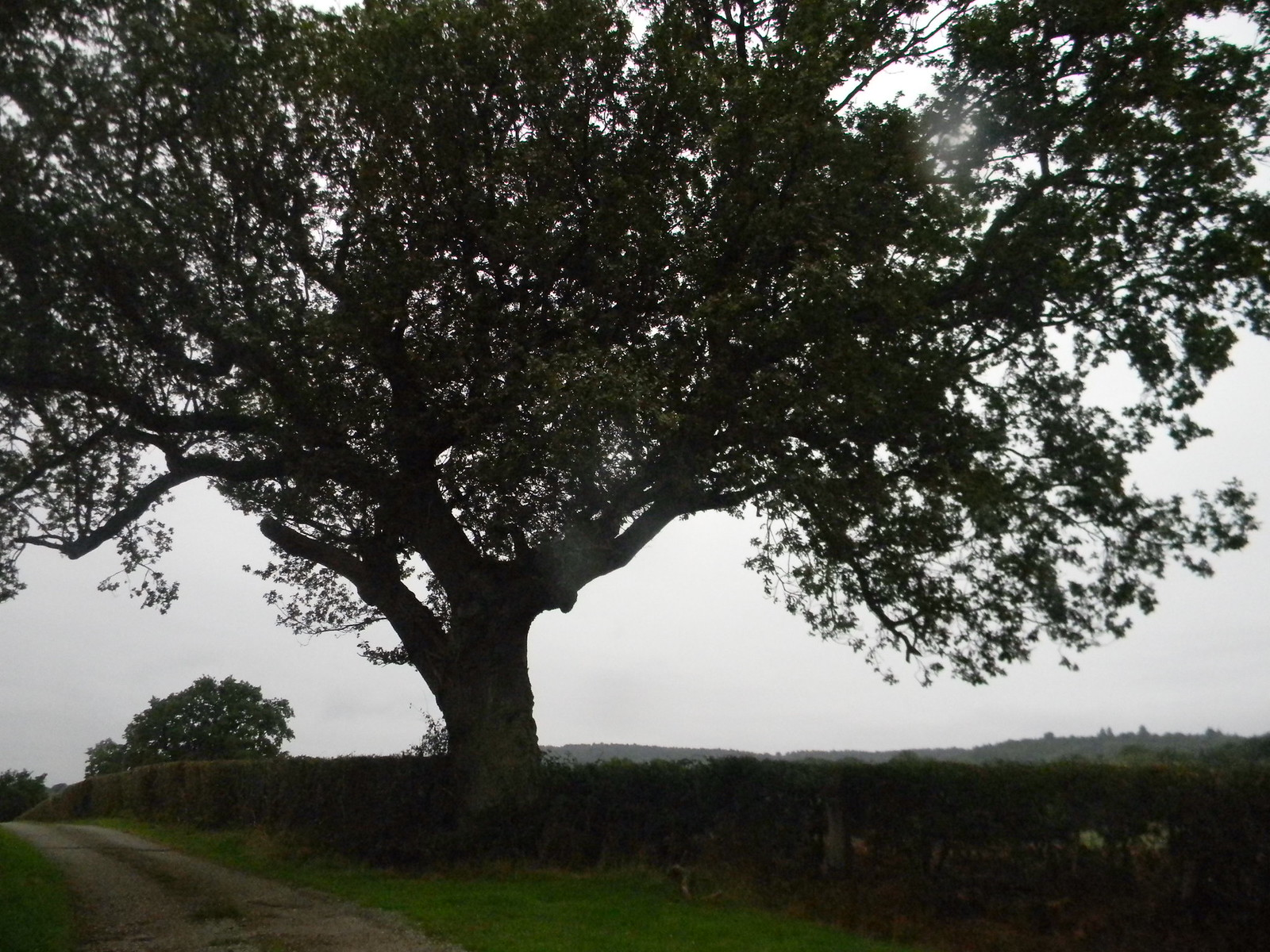 tree Holmwood to Gomshall