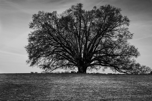 blackandwhite tree lines fujixpro1 dedpxl dedpxl01