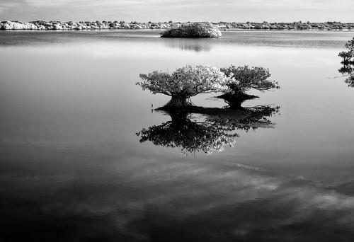 sky blackandwhite bw panorama usa cloud white black reflection tree water landscape ir florida mangrove swamp infrared marsh titusville centralflorida merrittislandnationalwildliferefuge minwr