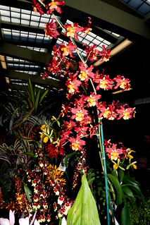photographed at the 2017 pacific orchid & garden exposition, orchid 2-17 | by nolehace