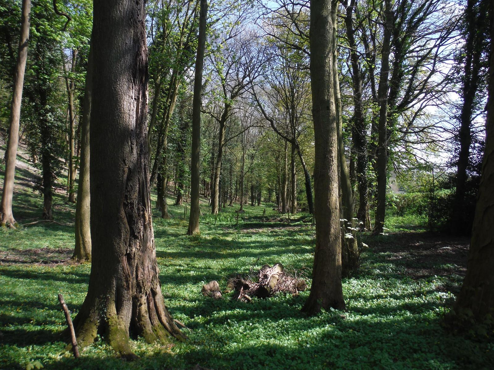 Highwood Bottom SWC Walk 10 - Little Kimble to Saunderton