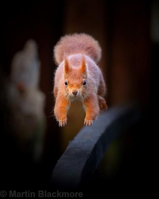 Flying Squirrel lol 6016(6D2)