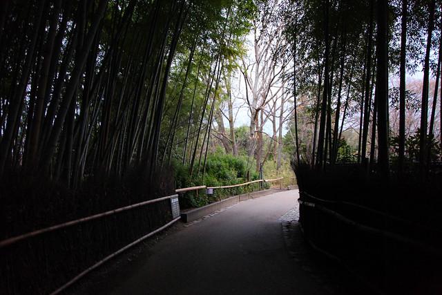 Arashiyama path