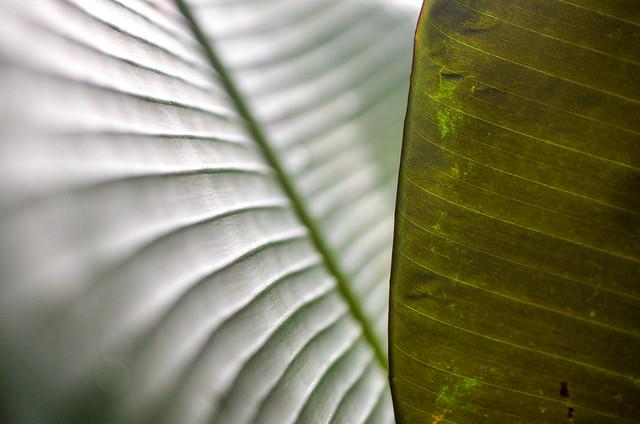 Rainforest leafs
