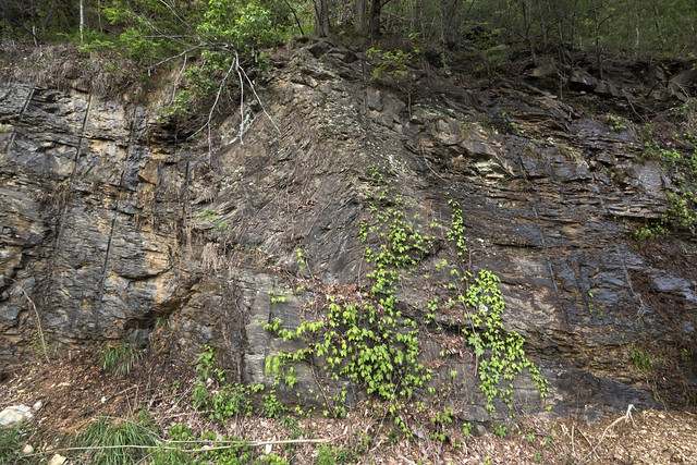 Anticline, fault line, Gizzard Group, Sequatchie County, Tennessee